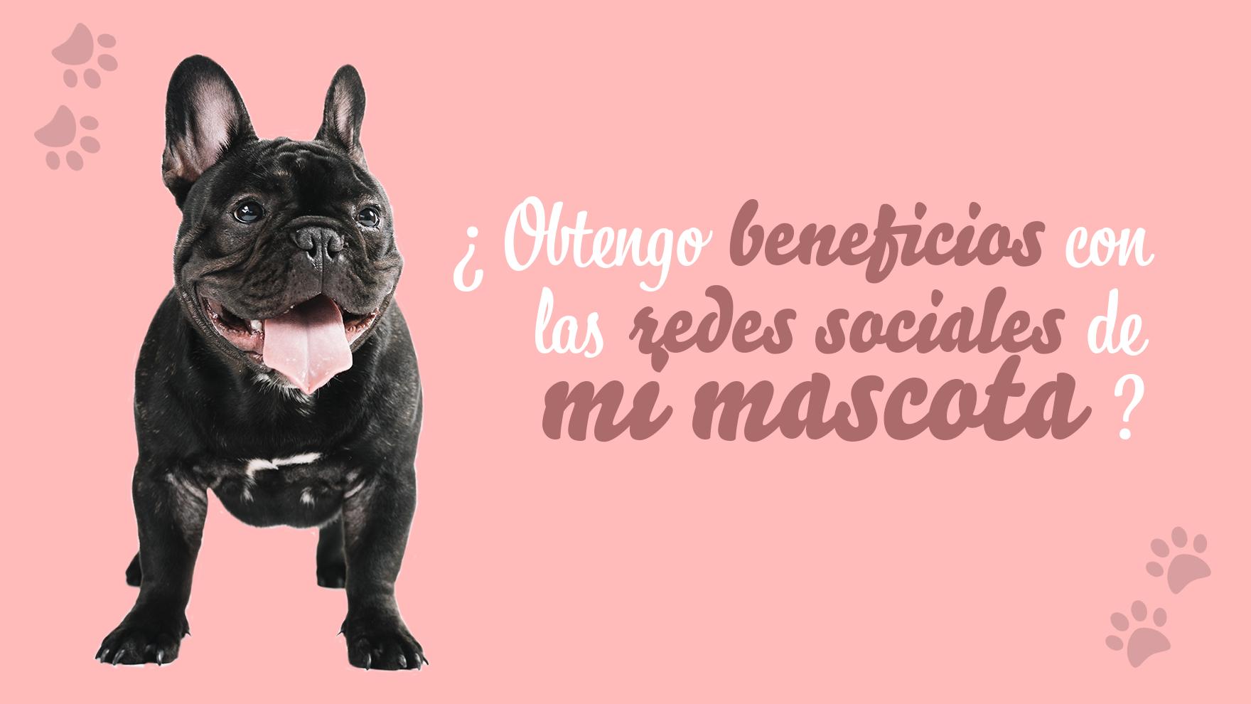 ¿Obtengo beneficios con las redes sociales de mi mascota?